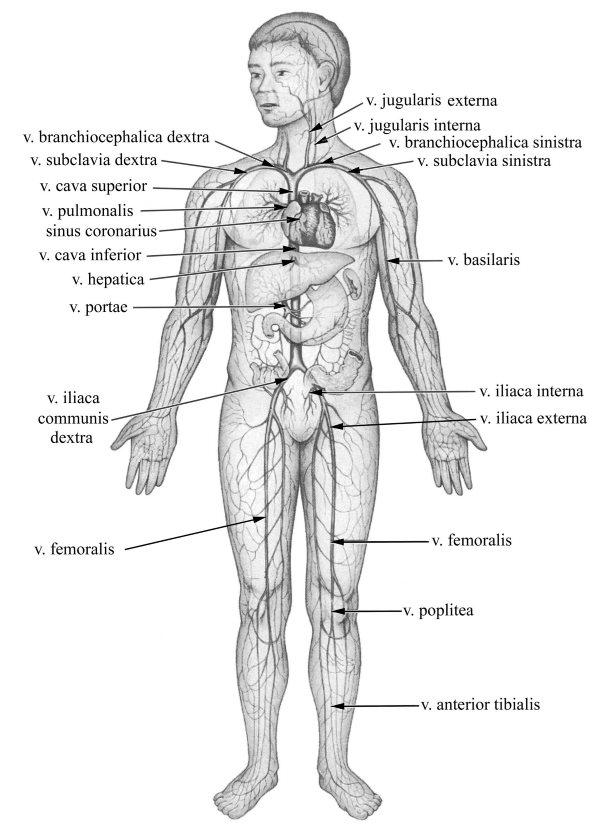 BNO – A keringési rendszer betegségei – Wikipédia