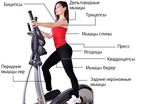 Milyen sport hasznos a hasnyálmirigyekben: ajánlott és ellenjavallt típusú testmozgás - Megelőzés