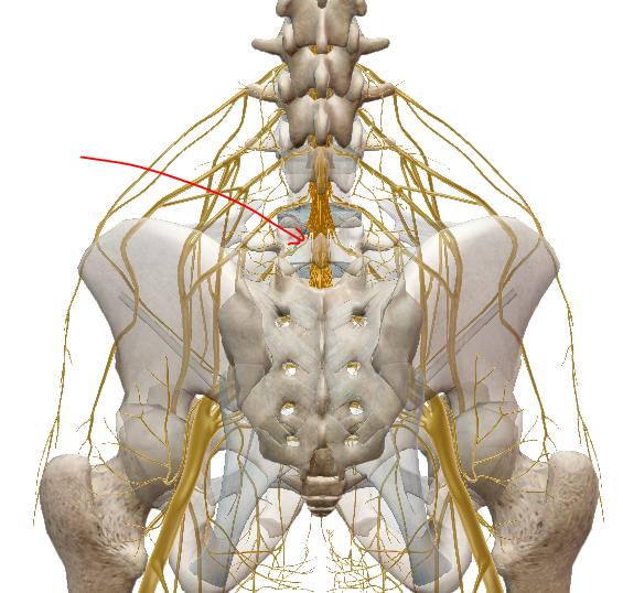 visszérgyulladással a hát alsó része fájhat