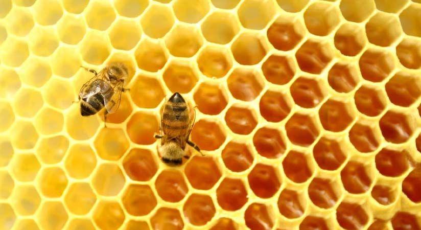 elhalt méhek a visszérben