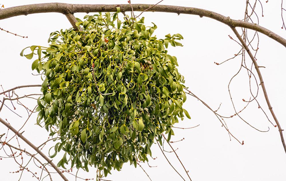 Gyógynövények érrendszeri panaszokra - Egészség | Femina