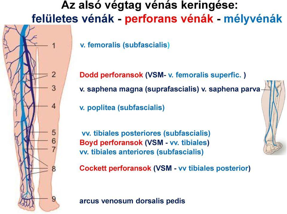 a nagy saphena véna visszér kezelése vitaminok a visszér kezelésére