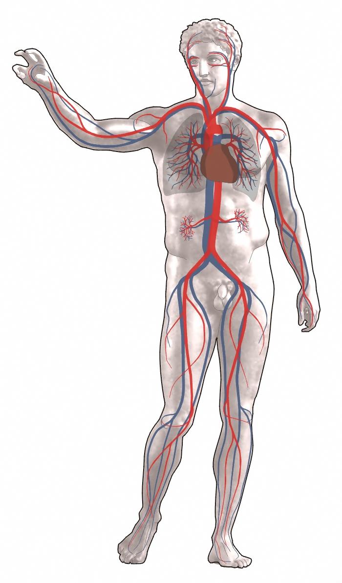 Tüdőembólia tünetei és kezelése